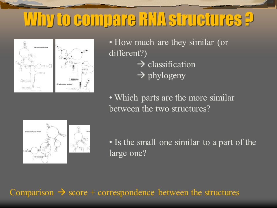Why to compare RNA structures .