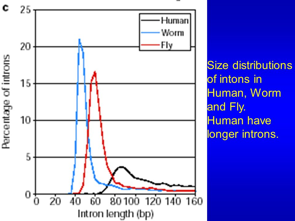 Fig 35a Size distributions of exons in Human, Worm and Fly. Human have shorter exons.