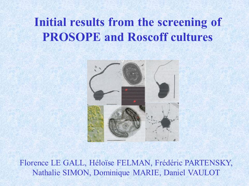 Initial results from the screening of PROSOPE and Roscoff cultures Florence LE GALL, Héloïse FELMAN, Frédéric PARTENSKY, Nathalie SIMON, Dominique MARIE, Daniel VAULOT
