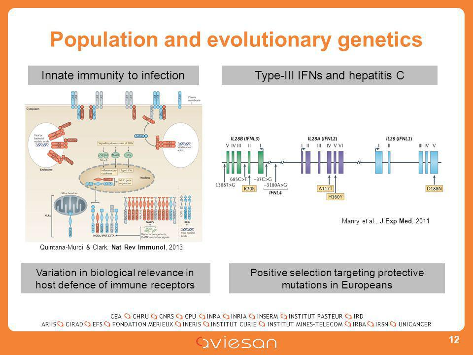 CEACHRUCNRSCPUINRAINRIAINSERMINSTITUT PASTEURIRD ARIISEFSINERISINSTITUT CURIEINSTITUT MINES-TELECOMUNICANCERIRBAIRSNCIRADFONDATION MERIEUX Population and evolutionary genetics 12 Variation in biological relevance in host defence of immune receptors Positive selection targeting protective mutations in Europeans Type-III IFNs and hepatitis CInnate immunity to infection Quintana-Murci & Clark.