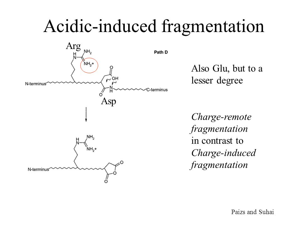 Acidic-induced fragmentation Paizs and Suhai Arg Asp Also Glu, but to a lesser degree Charge-remote fragmentation in contrast to Charge-induced fragmentation