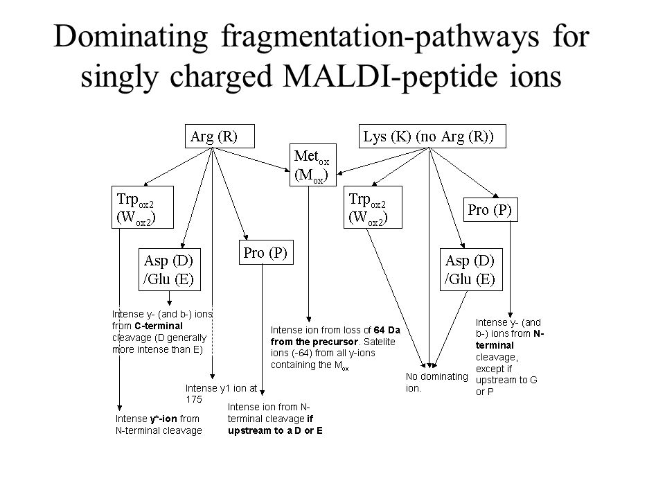 Dominating fragmentation-pathways for singly charged MALDI-peptide ions