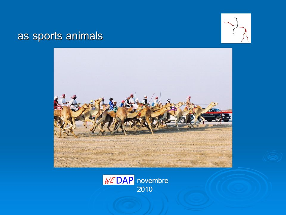 as sports animals