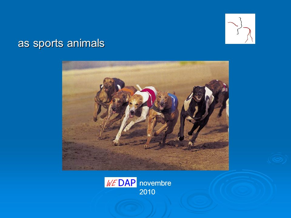novembre 2010 as sports animals