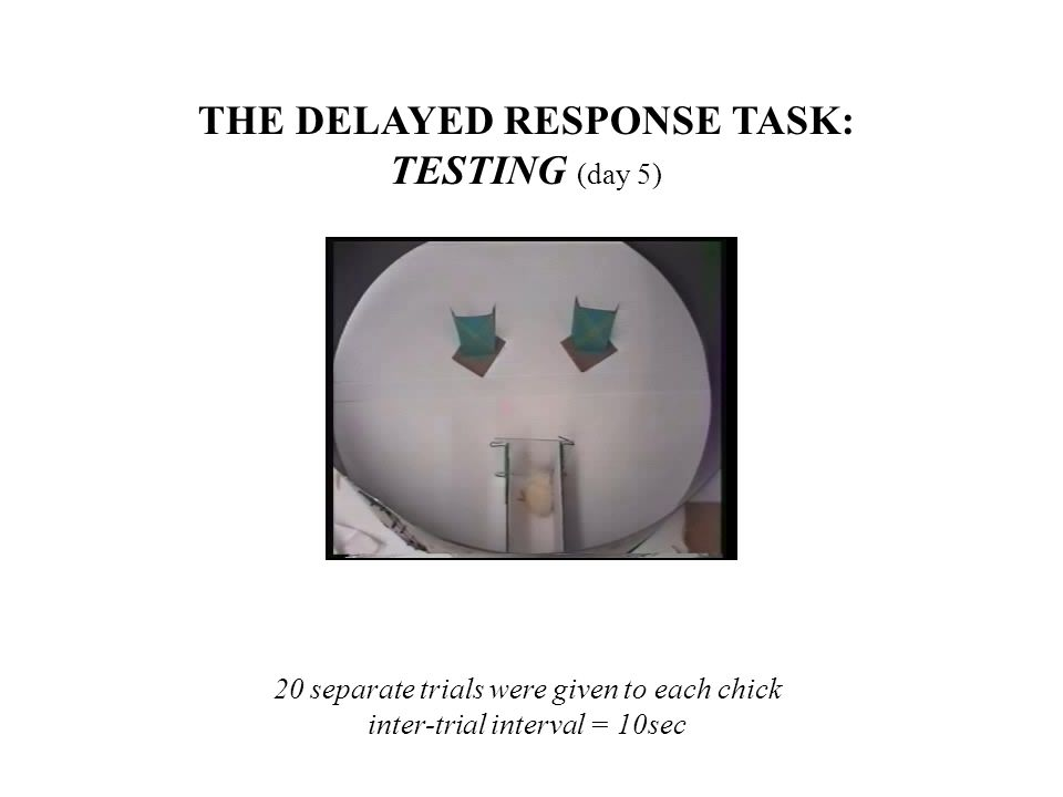 THE DELAYED RESPONSE TASK: TESTING (day 5) 20 separate trials were given to each chick inter-trial interval = 10sec