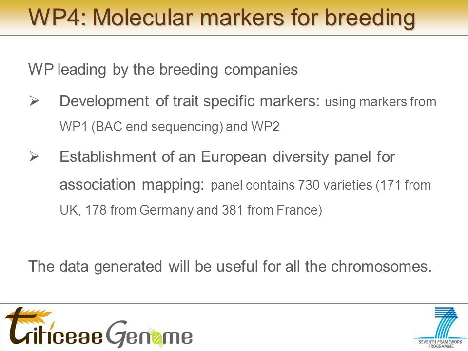 WP4: Molecular markers for breeding WP leading by the breeding companies Development of trait specific markers: using markers from WP1 (BAC end sequencing) and WP2 Establishment of an European diversity panel for association mapping: panel contains 730 varieties (171 from UK, 178 from Germany and 381 from France) The data generated will be useful for all the chromosomes.
