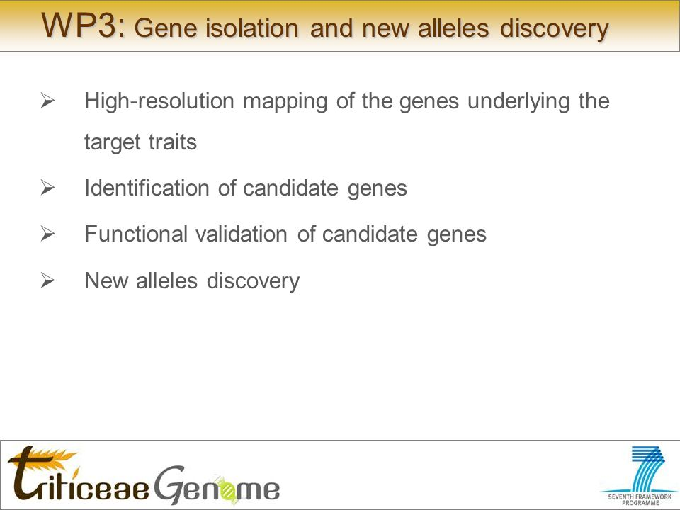 WP3: Gene isolation and new alleles discovery High-resolution mapping of the genes underlying the target traits Identification of candidate genes Functional validation of candidate genes New alleles discovery