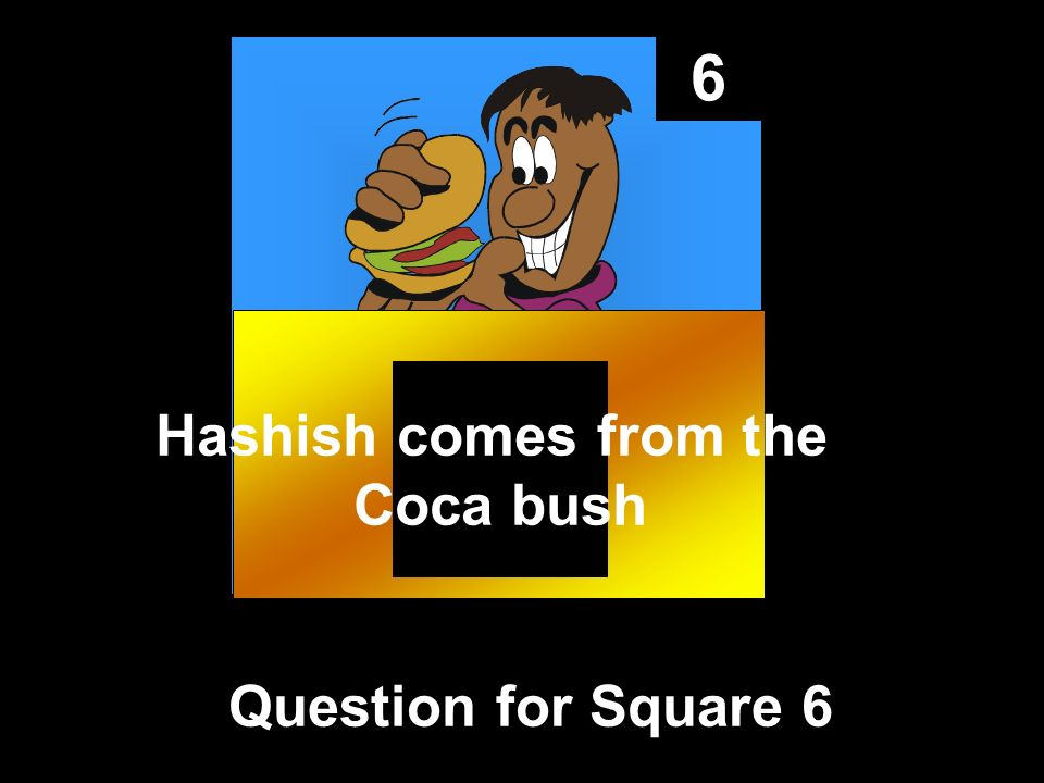6 Question for Square 6 Hashish comes from the Coca bush