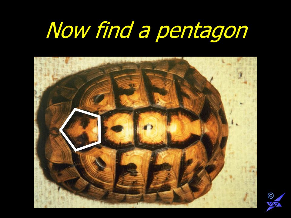 Now find a pentagon ©