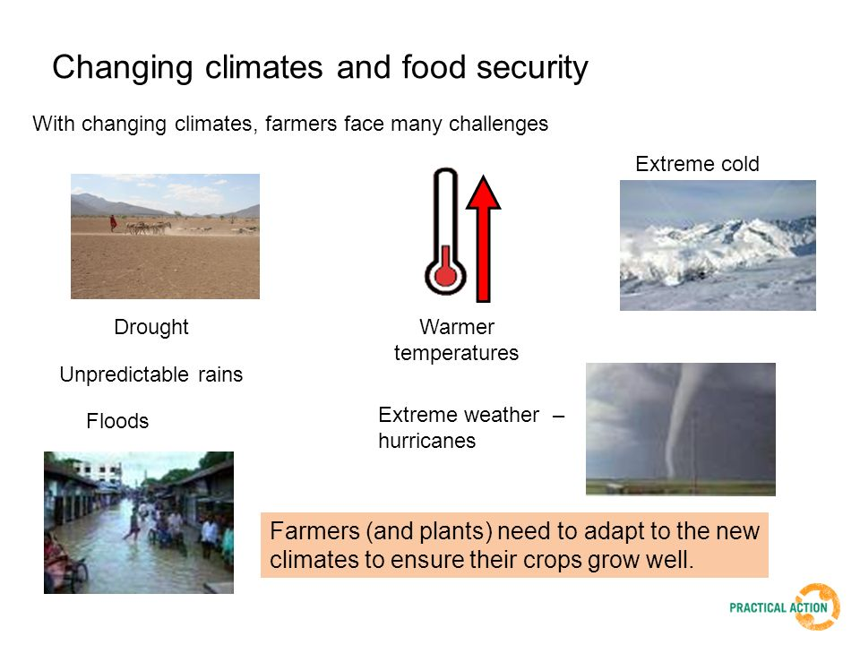 Changing climates and food security With changing climates, farmers face many challenges Drought Floods Warmer temperatures Extreme weather – hurricanes Farmers (and plants) need to adapt to the new climates to ensure their crops grow well.