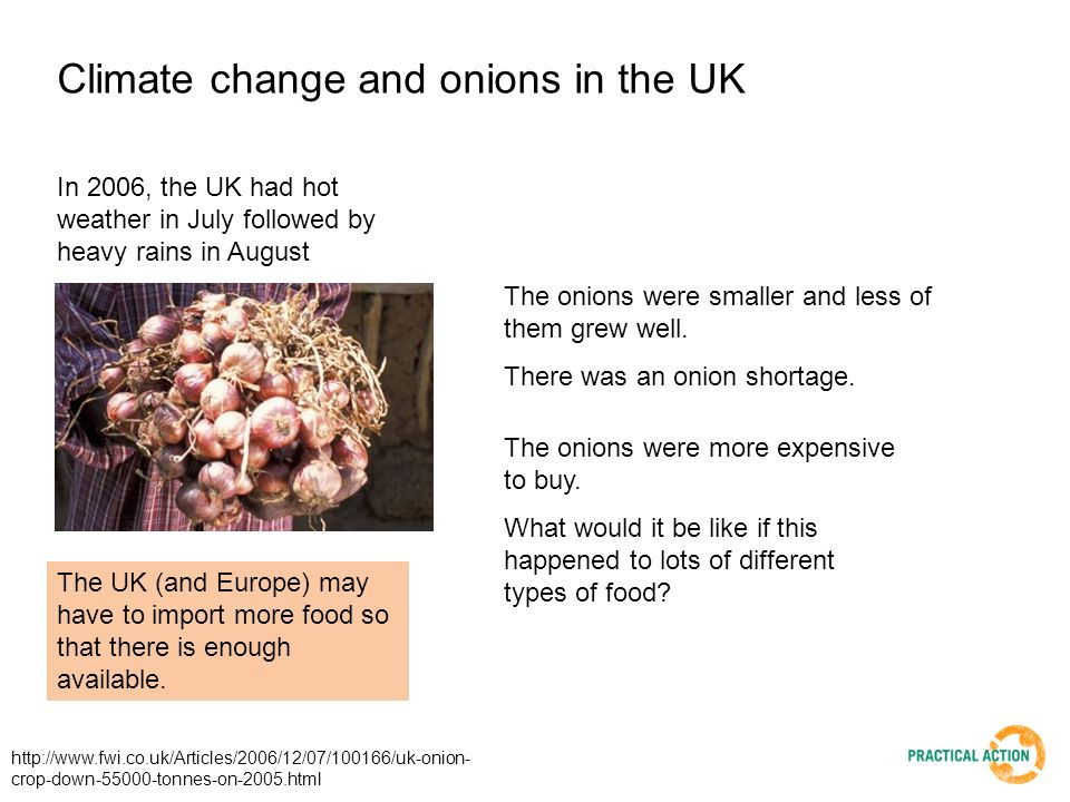 Climate change and onions in the UK In 2006, the UK had hot weather in July followed by heavy rains in August The onions were smaller and less of them grew well.