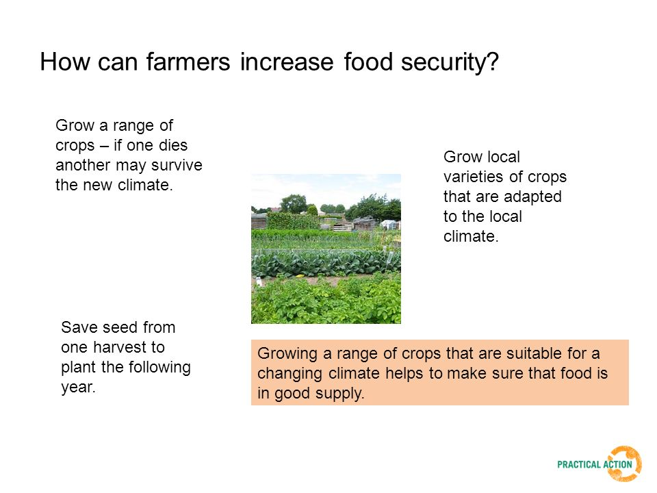 How can farmers increase food security.