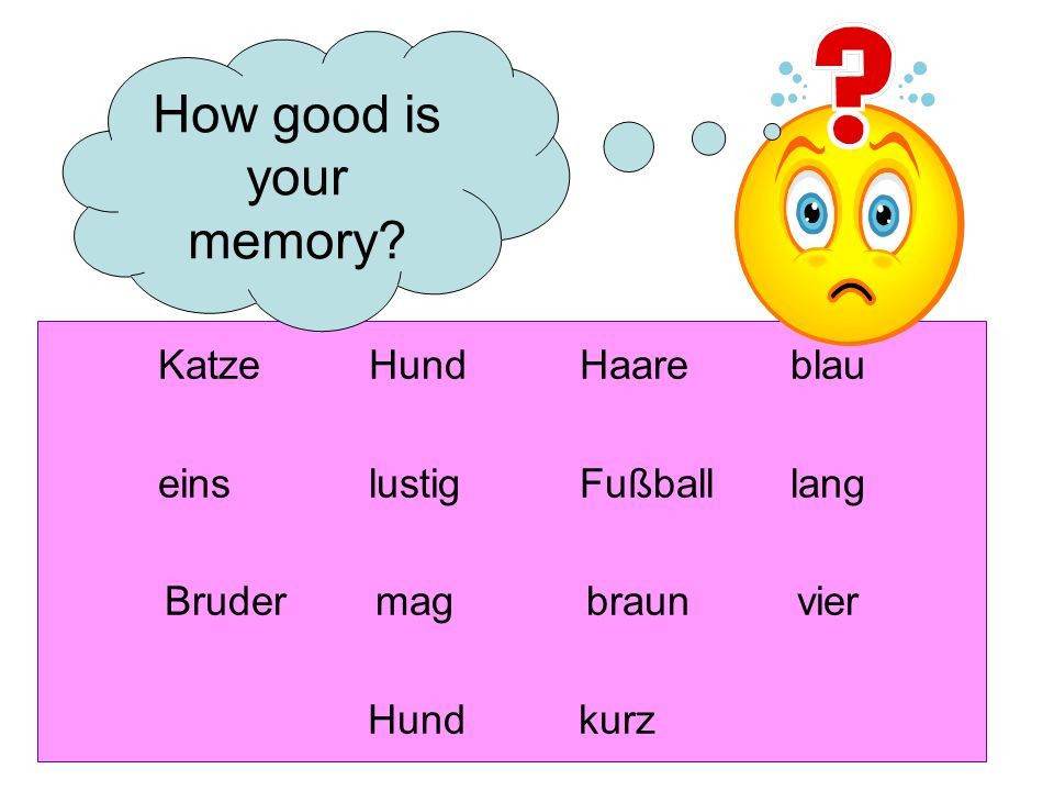 KatzeHundHaareblau einslustigFußballlang Brudermagbraunvier Hundkurz How good is your memory