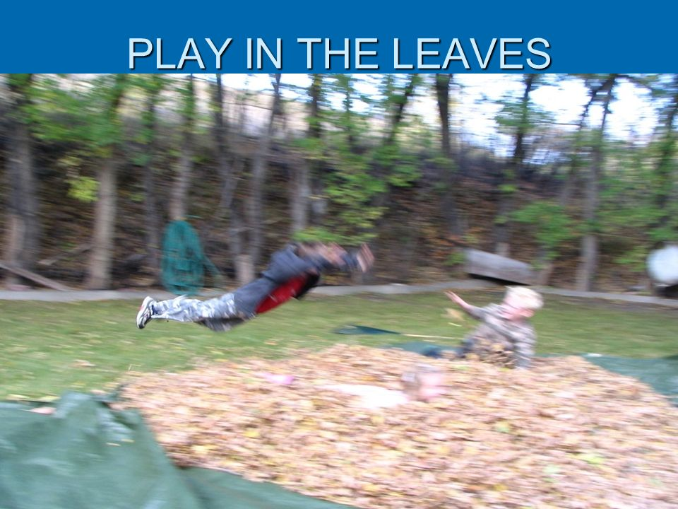 PLAY IN THE LEAVES