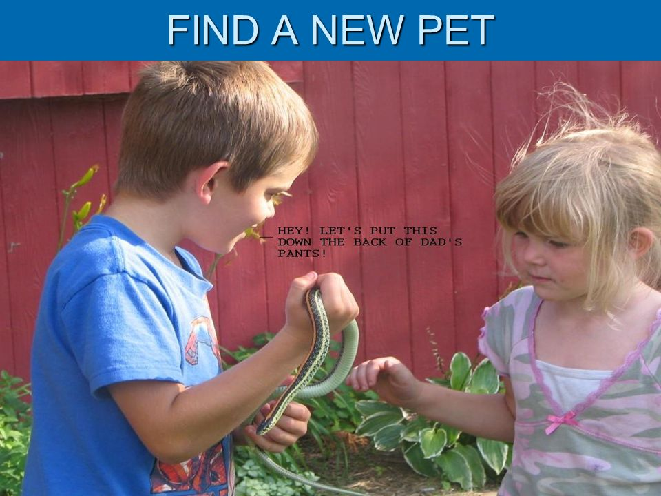 FIND A NEW PET