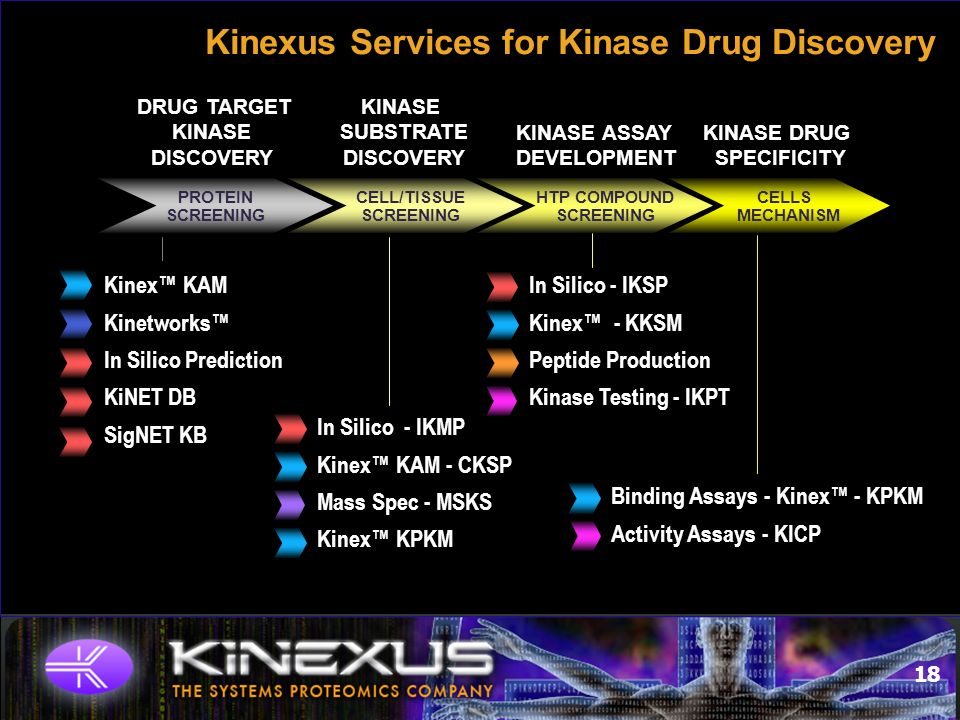 18 Kinexus Services for Kinase Drug Discovery KINASE DRUG SPECIFICITY DRUG TARGET KINASE DISCOVERY KINASE ASSAY DEVELOPMENT KINASE SUBSTRATE DISCOVERY PROTEIN SCREENING CELL/TISSUE SCREENING HTP COMPOUND SCREENING CELLS MECHANISM Kinex KAM Kinetworks In Silico Prediction KiNET DB SigNET KB In Silico - IKMP Kinex KAM - CKSP Mass Spec - MSKS Kinex KPKM In Silico - IKSP Kinex - KKSM Peptide Production Kinase Testing - IKPT Binding Assays - Kinex - KPKM Activity Assays - KICP