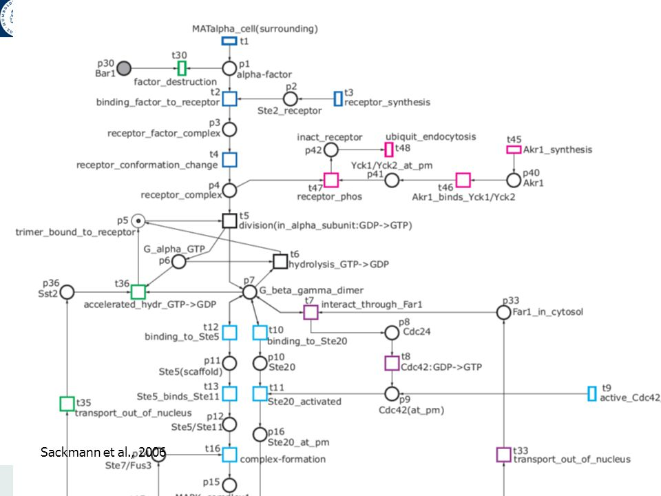 VL Netzwerke, WS 2007/08 Edda Klipp 27 Max Planck Institute Molecular Genetics Humboldt University Berlin Theoretical Biophysics Model of Yeast Pheromone Pathway Sackmann et al., 2006