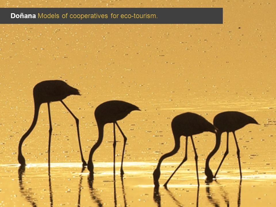 Doñana Models of cooperatives for eco-tourism.