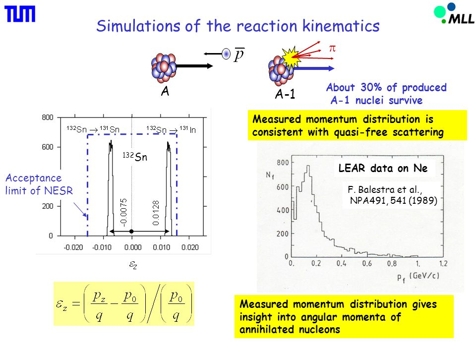 Simulations of the reaction kinematics About 30% of produced A-1 nuclei survive 132 Sn Acceptance limit of NESR A A-1 Measured momentum distribution is consistent with quasi-free scattering F.