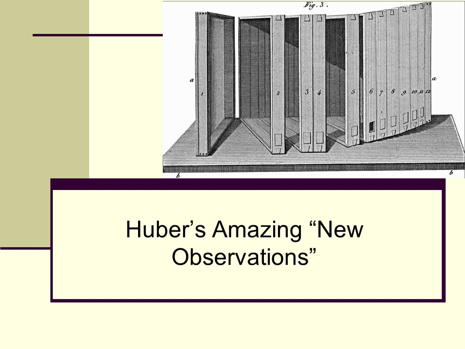 Hubers Amazing New Observations