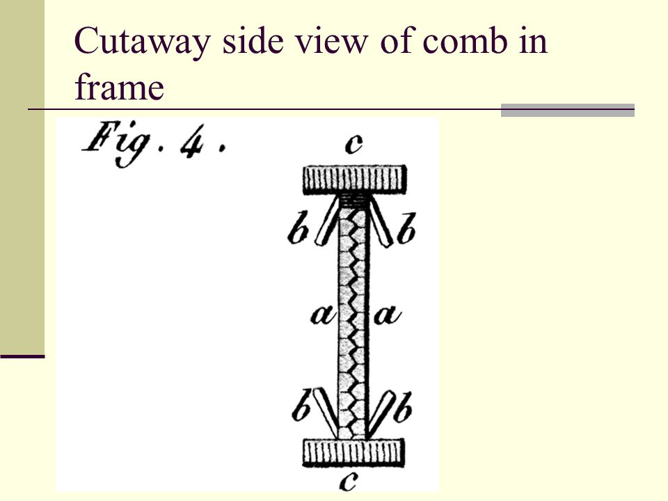 Cutaway side view of comb in frame