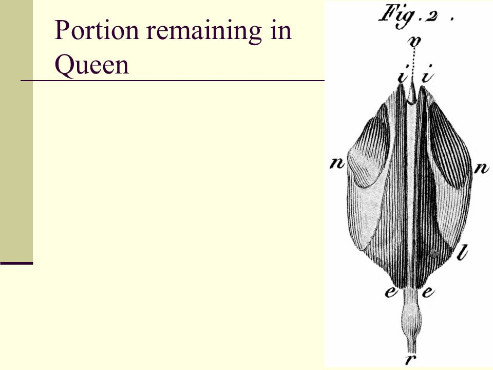 Portion remaining in Queen