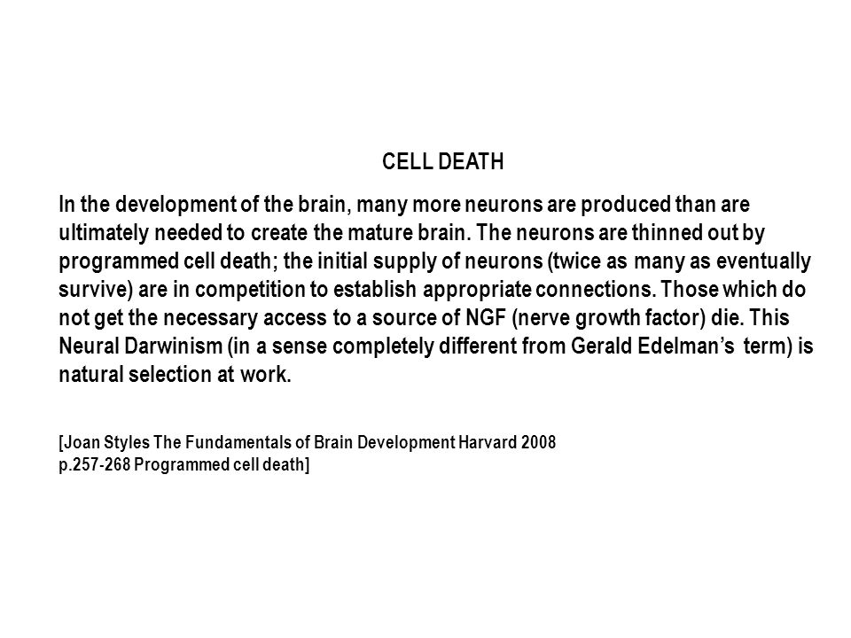CELL DEATH In the development of the brain, many more neurons are produced than are ultimately needed to create the mature brain.