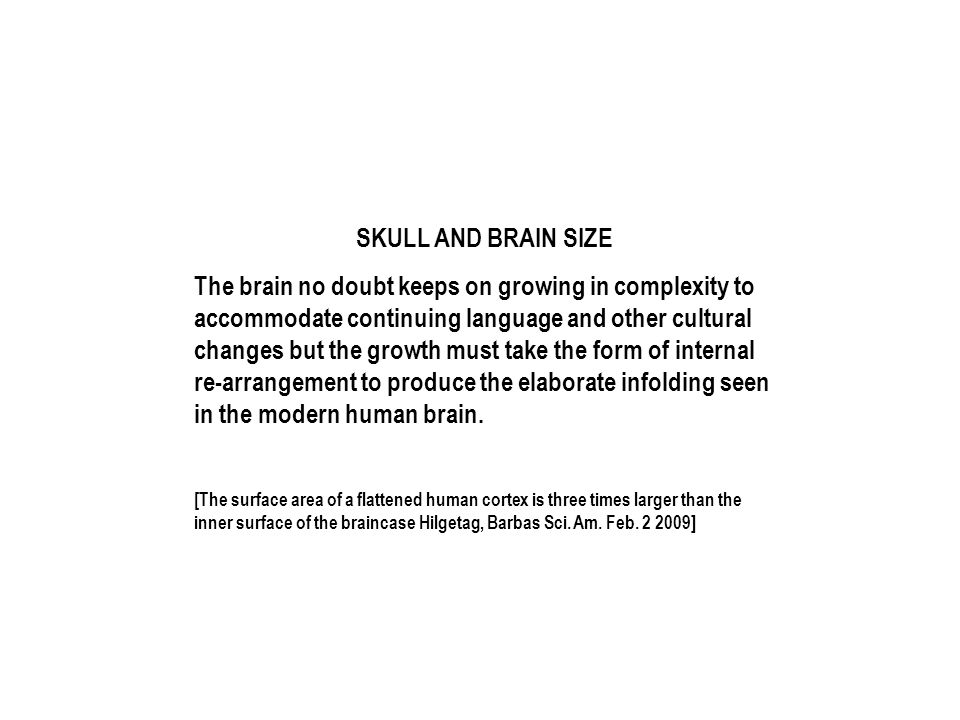 SKULL AND BRAIN SIZE The brain no doubt keeps on growing in complexity to accommodate continuing language and other cultural changes but the growth must take the form of internal re-arrangement to produce the elaborate infolding seen in the modern human brain.