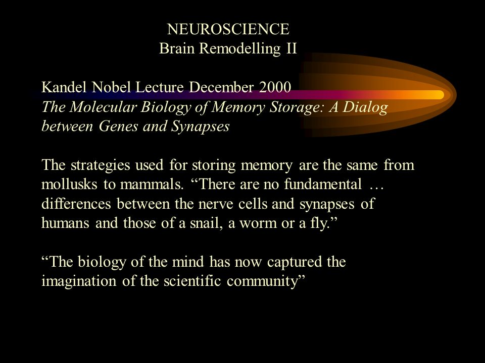 NEUROSCIENCE Brain Remodelling II Kandel Nobel Lecture December 2000 The Molecular Biology of Memory Storage: A Dialog between Genes and Synapses The strategies used for storing memory are the same from mollusks to mammals.