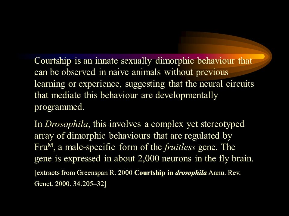 Courtship is an innate sexually dimorphic behaviour that can be observed in naive animals without previous learning or experience, suggesting that the neural circuits that mediate this behaviour are developmentally programmed.