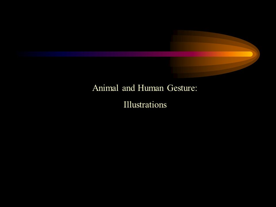 Animal and Human Gesture: Illustrations