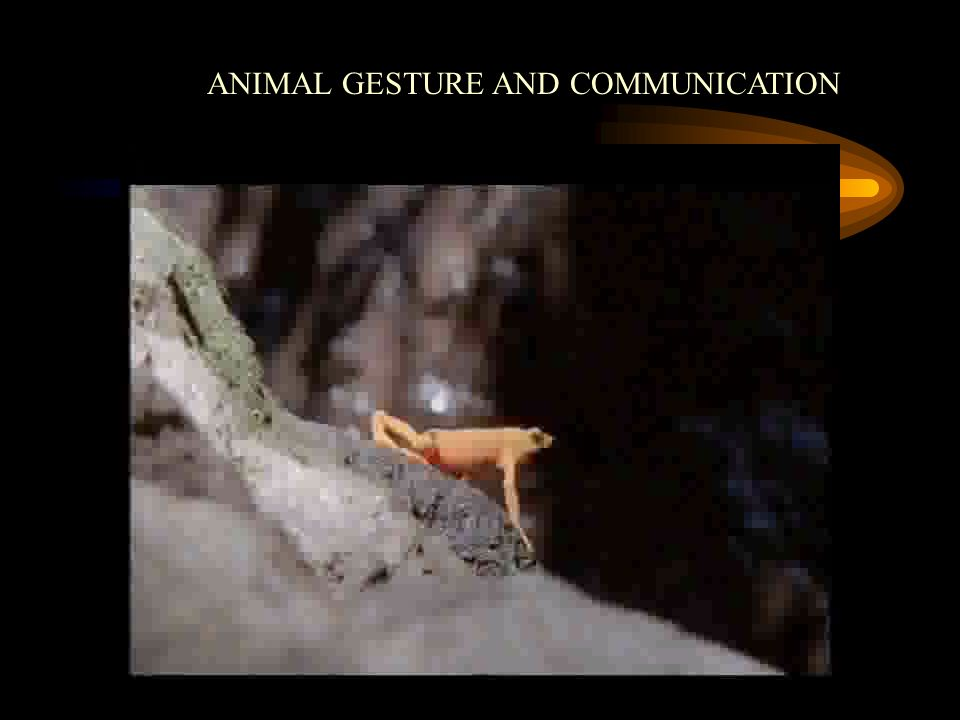 ANIMAL GESTURE AND COMMUNICATION