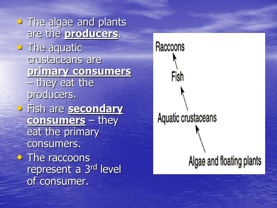 The algae and plants are the producers.