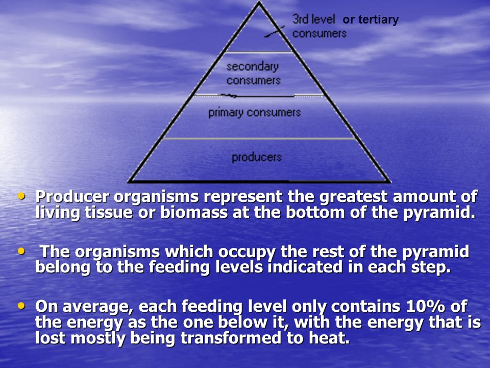 Producer organisms represent the greatest amount of living tissue or biomass at the bottom of the pyramid.
