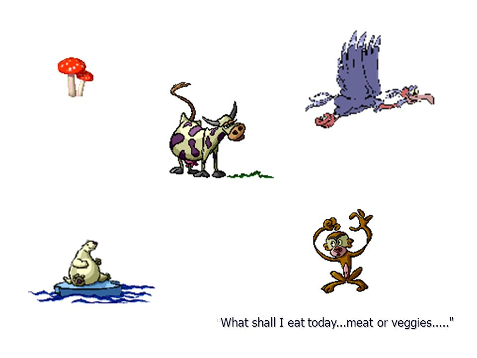 What shall I eat today...meat or veggies.....