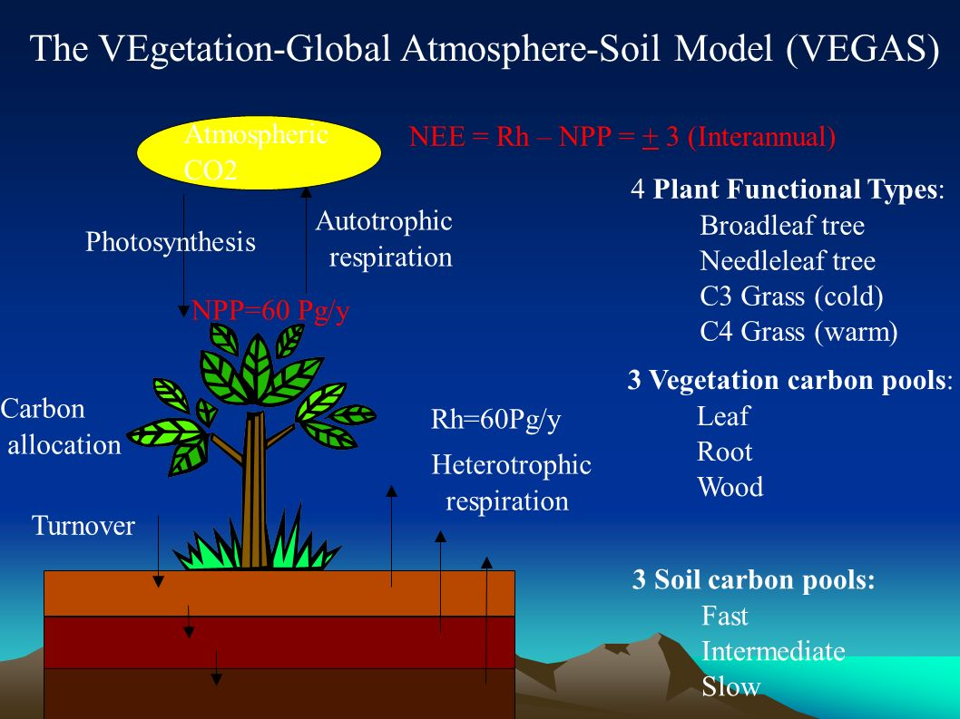 Photosynthesis Autotrophic respiration Carbon allocation Turnover Heterotrophic respiration 4 Plant Functional Types: Broadleaf tree Needleleaf tree C3 Grass (cold) C4 Grass (warm) 3 Vegetation carbon pools: Leaf Root Wood 3 Soil carbon pools: Fast Intermediate Slow Atmospheric CO2 The VEgetation-Global Atmosphere-Soil Model (VEGAS) NPP=60 Pg/y Rh=60Pg/y NEE = Rh – NPP = + 3 (Interannual)