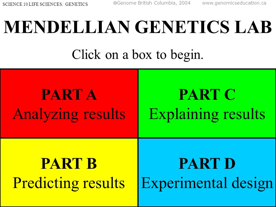 MENDELLIAN GENETICS LAB Click on a box to begin.