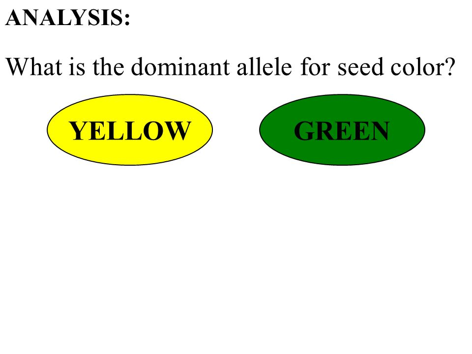 What is the dominant allele for seed color ANALYSIS: YELLOW GREEN