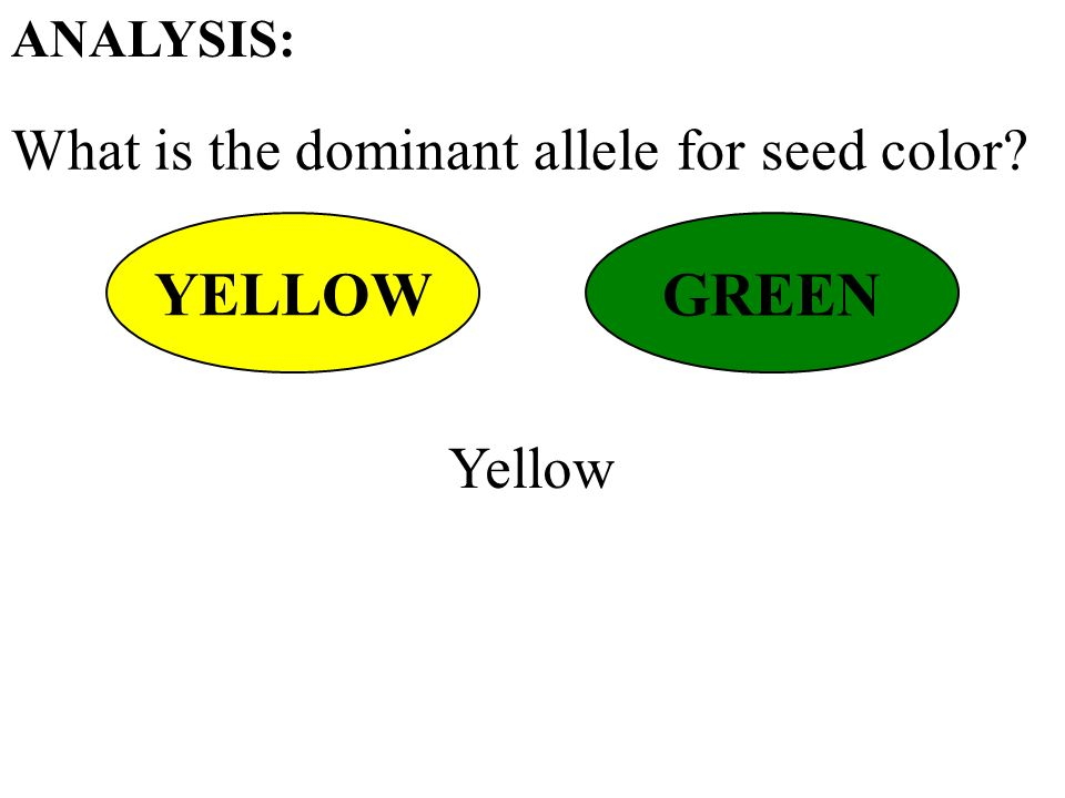 What is the dominant allele for seed color ANALYSIS: YELLOW GREEN Yellow