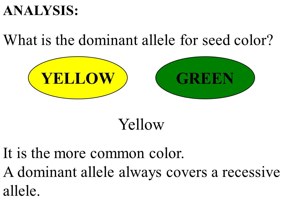 What is the dominant allele for seed color.