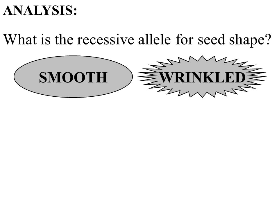 What is the recessive allele for seed shape ANALYSIS: SMOOTH WRINKLED