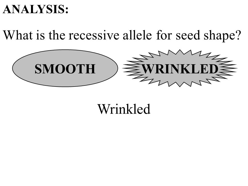 What is the recessive allele for seed shape ANALYSIS: SMOOTH Wrinkled WRINKLED