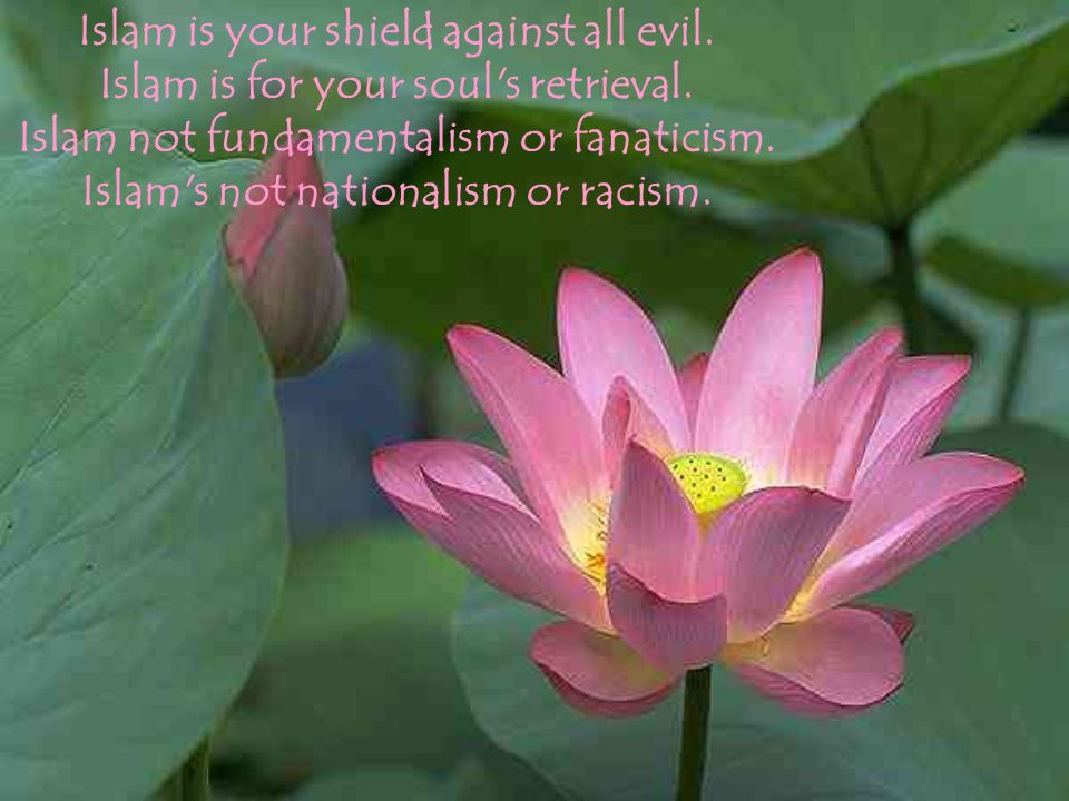 Islam is your shield against all evil. Islam is for your soul s retrieval.