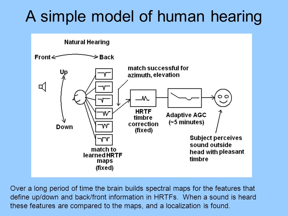 A simple model of human hearing Over a long period of time the brain builds spectral maps for the features that define up/down and back/front information in HRTFs.