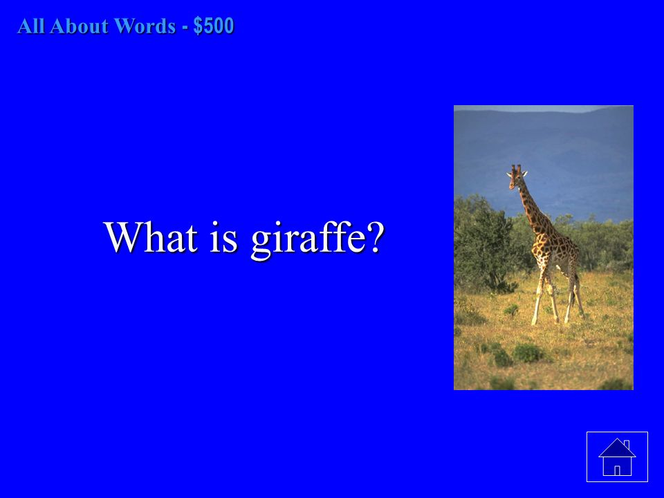 All About Words - $500 What is giraffe