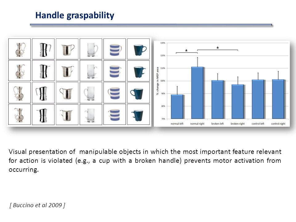 Handle graspability [ Buccino et al 2009 ] Visual presentation of manipulable objects in which the most important feature relevant for action is violated (e.g., a cup with a broken handle) prevents motor activation from occurring.