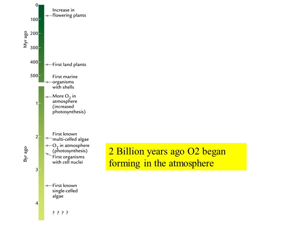 2 Billion years ago O2 began forming in the atmosphere