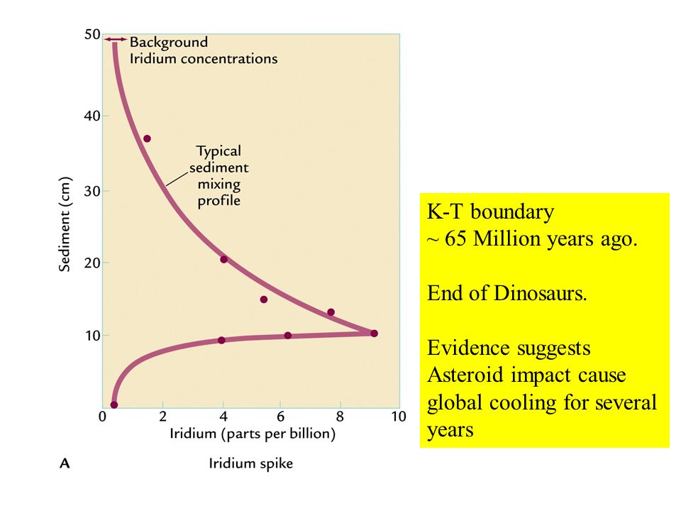 K-T boundary ~ 65 Million years ago. End of Dinosaurs.