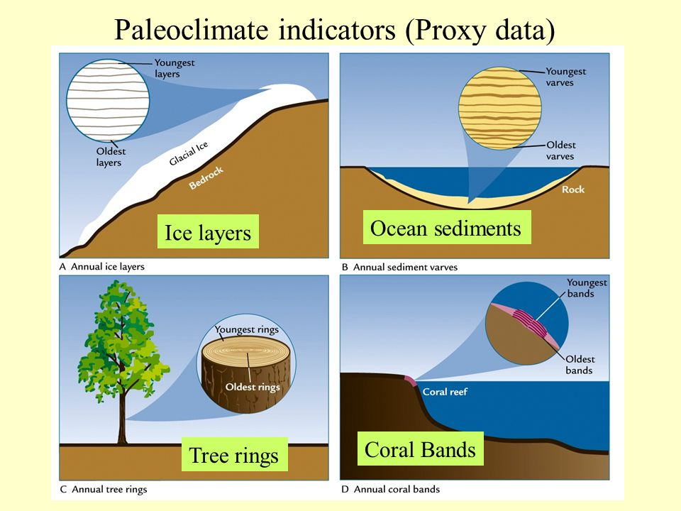 Paleoclimate indicators (Proxy data) Ice layers Ocean sediments Coral Bands Tree rings