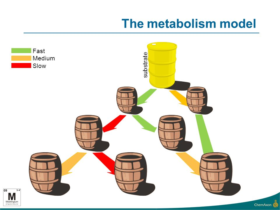 The metabolism model substrate Fast Medium Slow